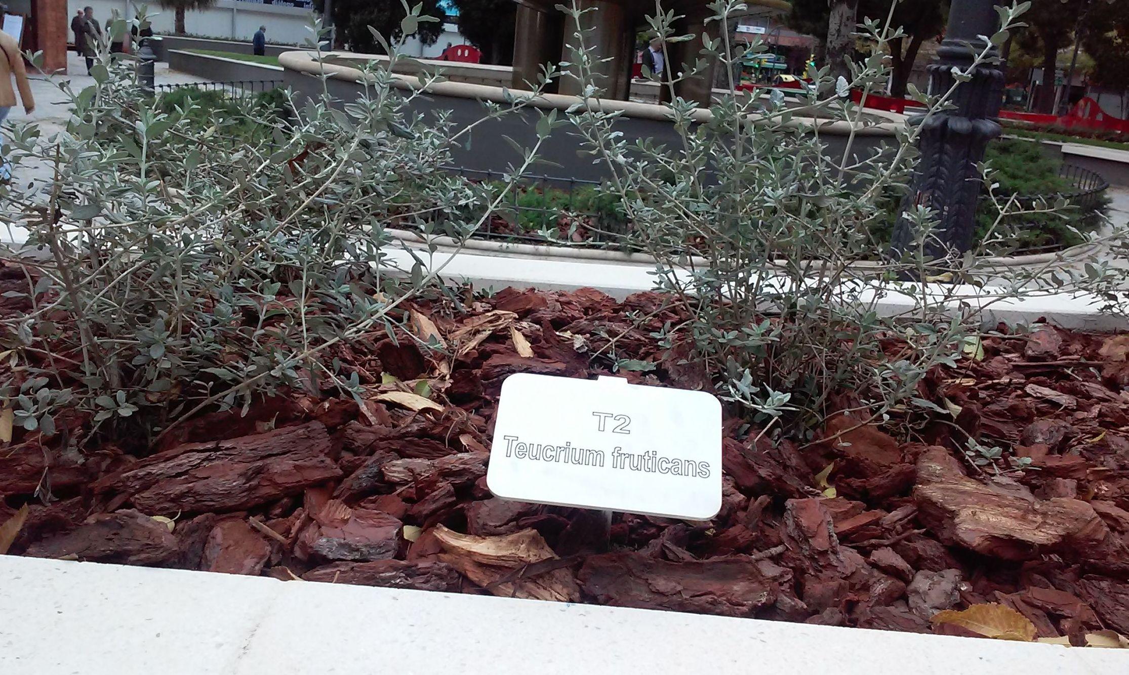 Foto 65 de Diseño y mantenimiento de jardines en  | Danimayos Crea Tu Jardin