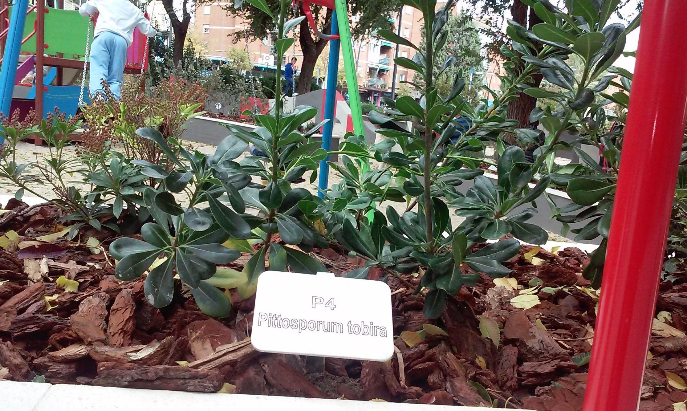 Foto 79 de Diseño y mantenimiento de jardines en  | Danimayos Crea Tu Jardin