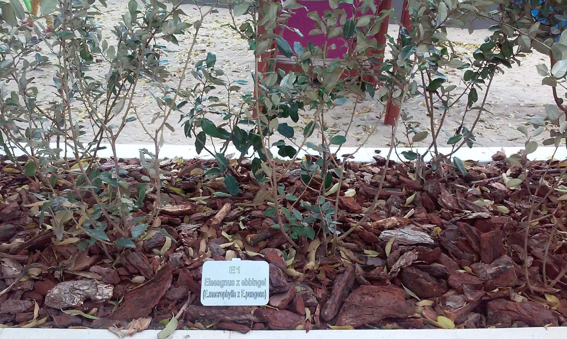 Foto 96 de Diseño y mantenimiento de jardines en  | Danimayos Crea Tu Jardin