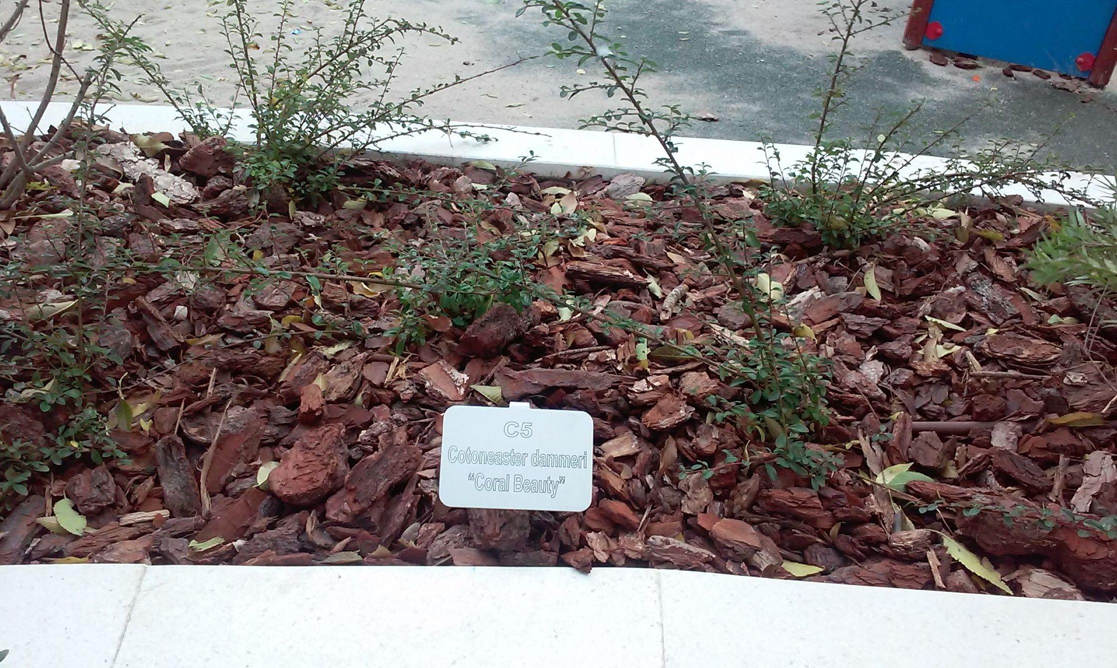 Foto 100 de Diseño y mantenimiento de jardines en  | Danimayos Crea Tu Jardin