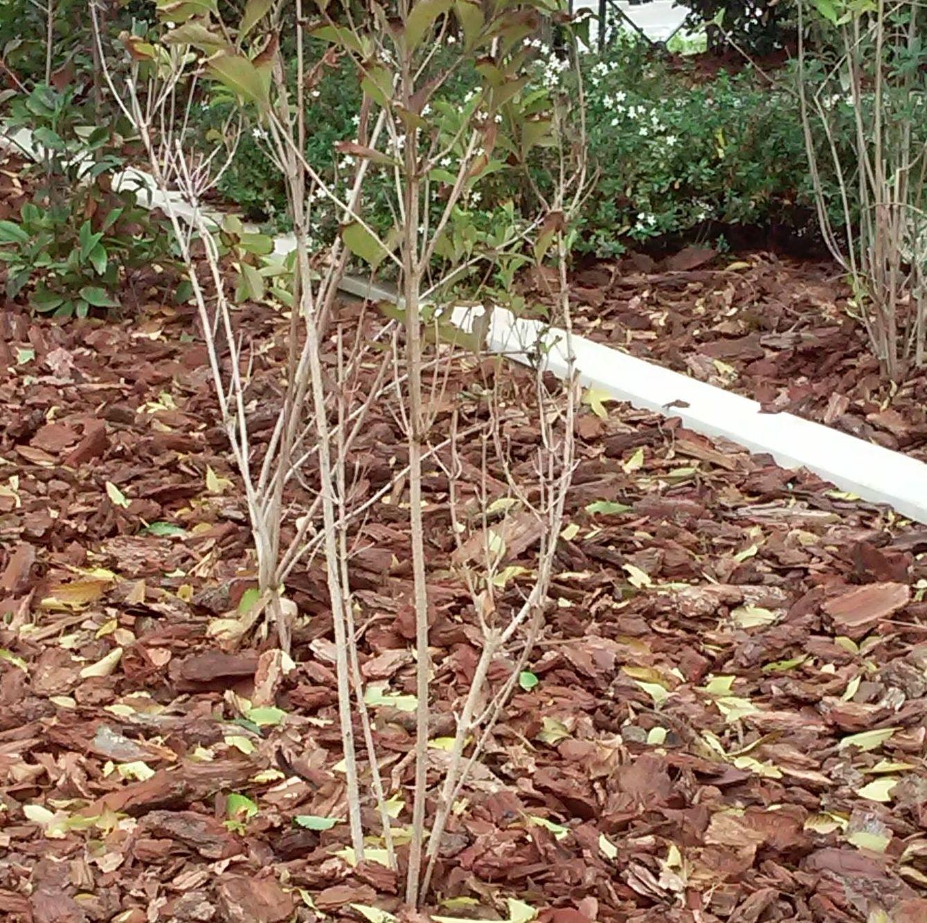 Foto 63 de Diseño y mantenimiento de jardines en  | Danimayos Crea Tu Jardin