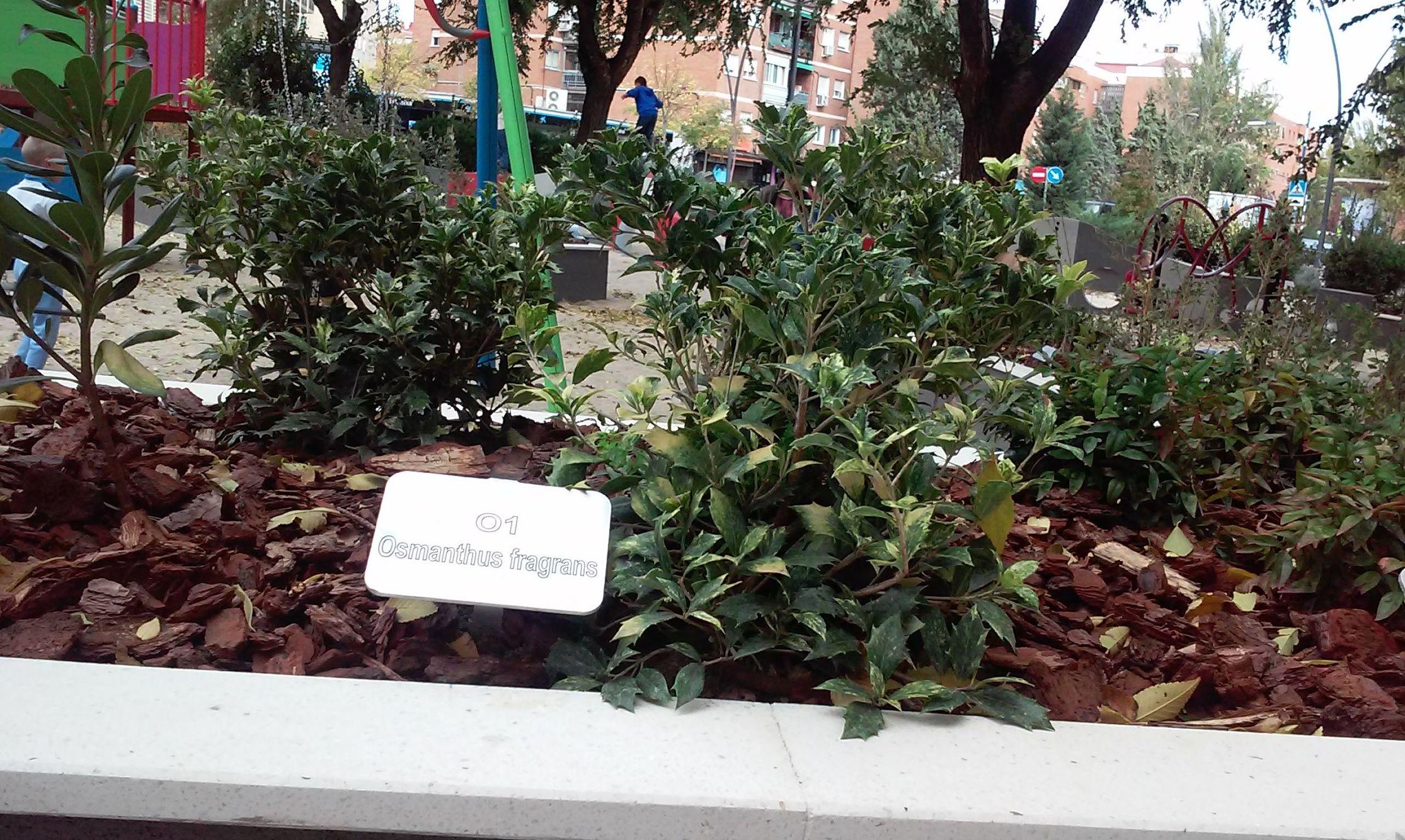 Foto 81 de Diseño y mantenimiento de jardines en  | Danimayos Crea Tu Jardin