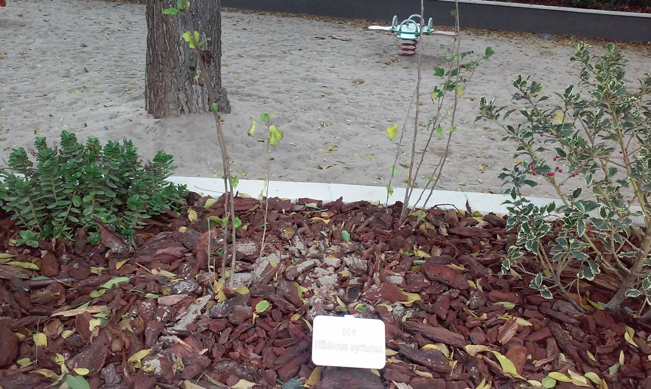 Foto 92 de Diseño y mantenimiento de jardines en  | Danimayos Crea Tu Jardin