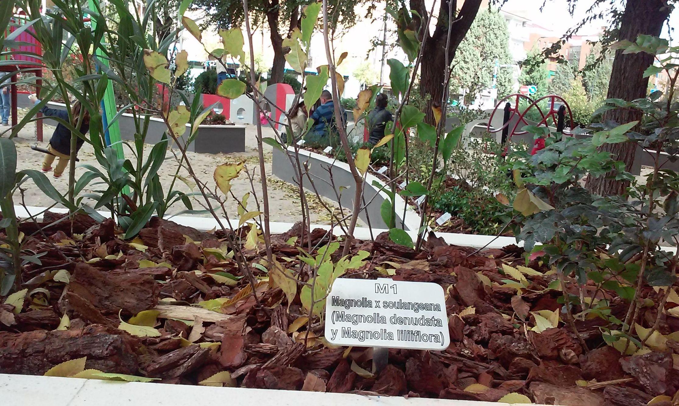 Foto 84 de Diseño y mantenimiento de jardines en  | Danimayos Crea Tu Jardin