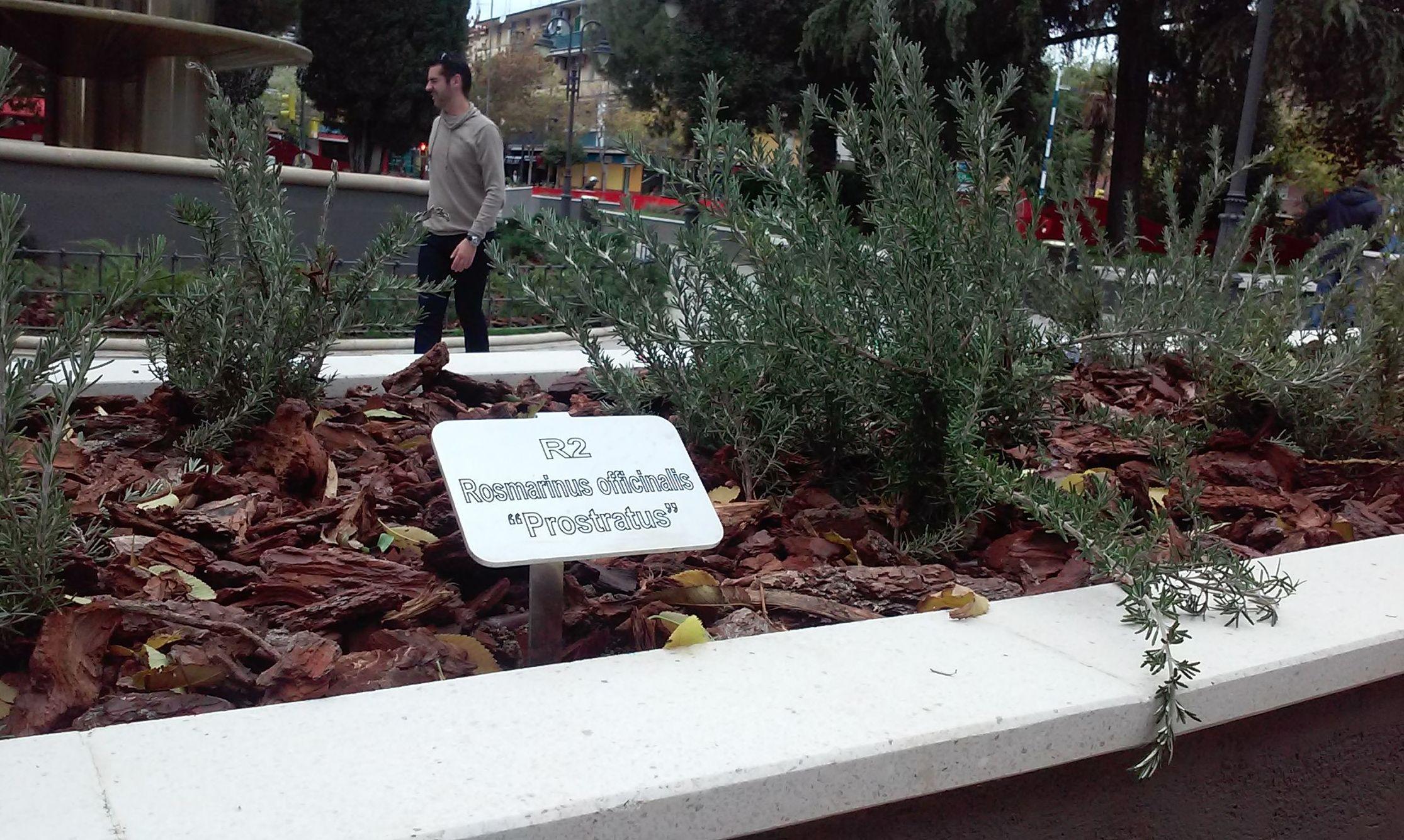 Foto 74 de Diseño y mantenimiento de jardines en  | Danimayos Crea Tu Jardin