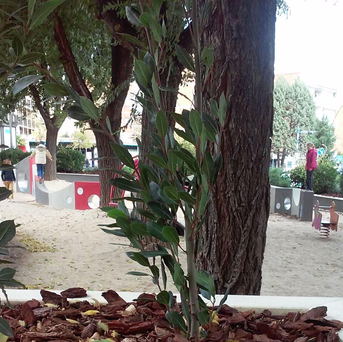 Foto 88 de Diseño y mantenimiento de jardines en  | Danimayos Crea Tu Jardin