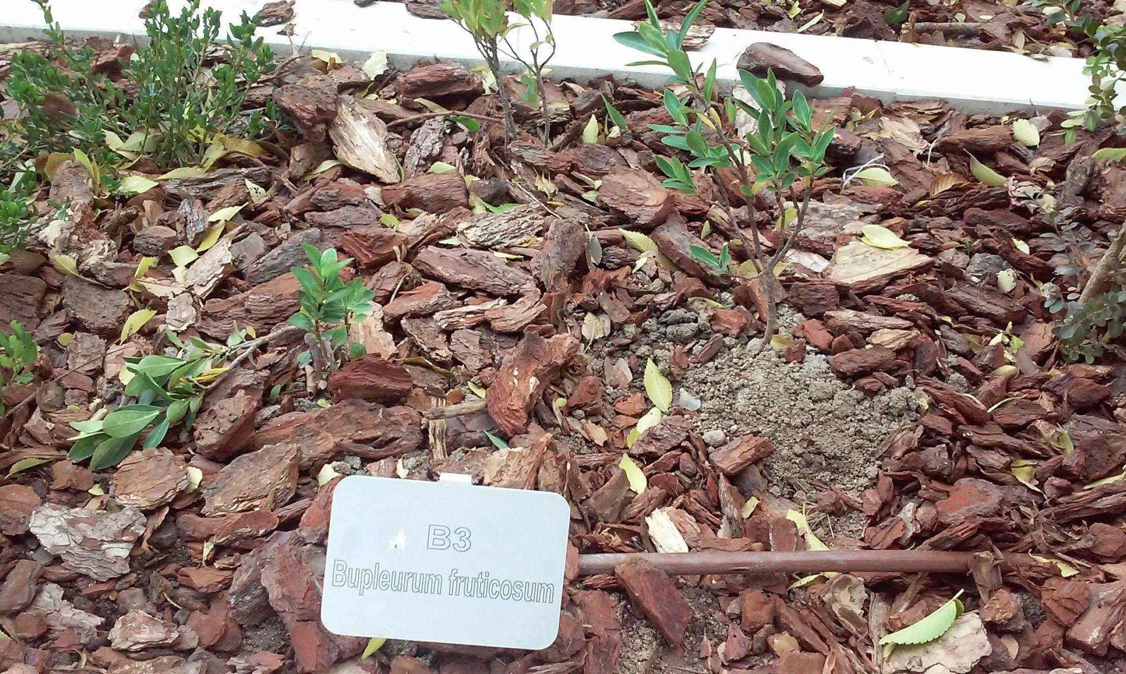 Foto 103 de Diseño y mantenimiento de jardines en  | Danimayos Crea Tu Jardin