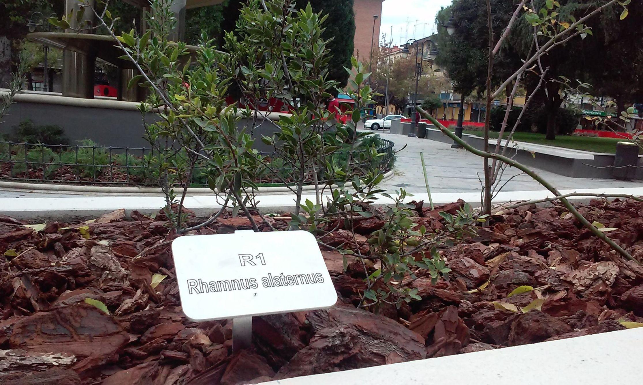 Foto 73 de Diseño y mantenimiento de jardines en  | Danimayos Crea Tu Jardin