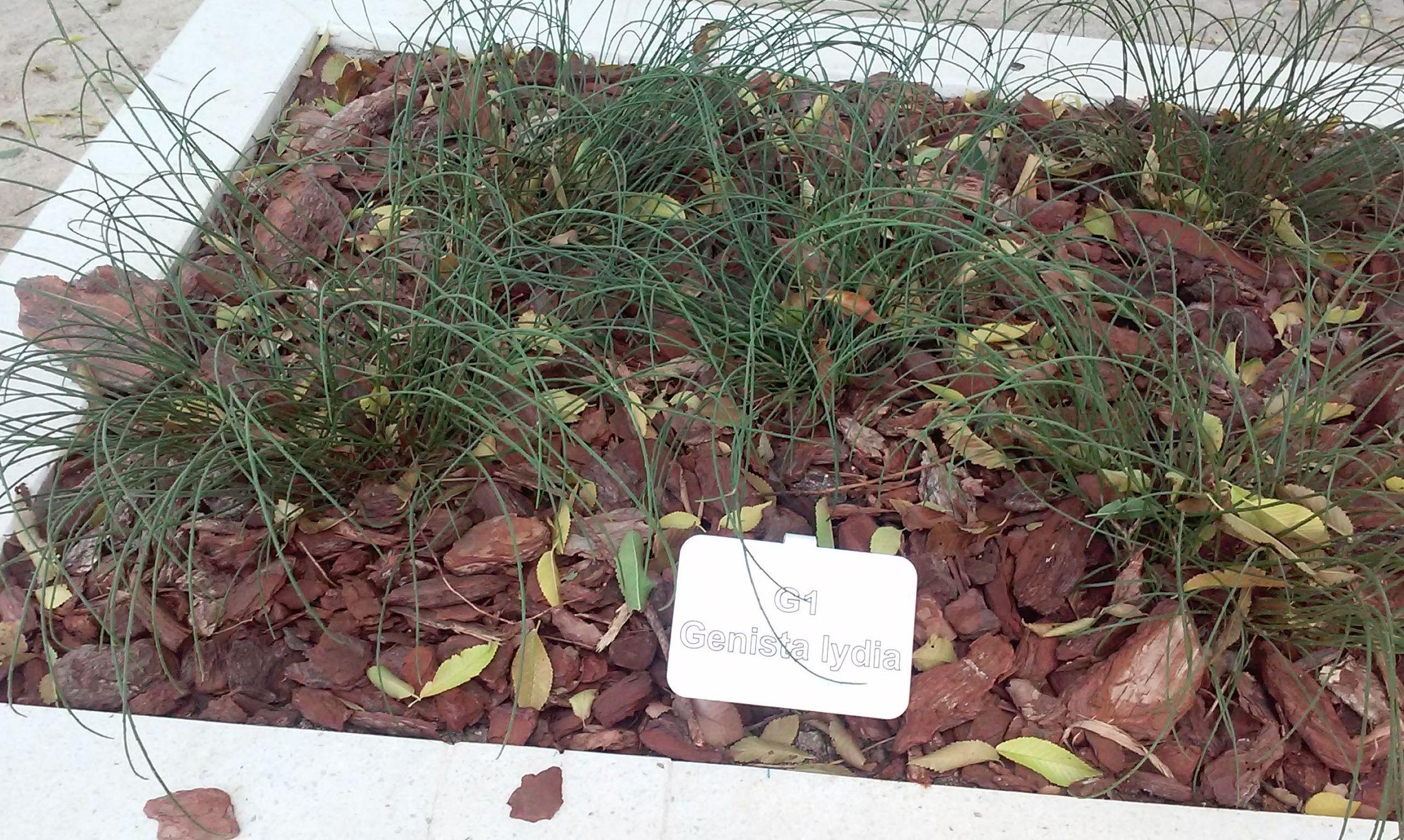 Foto 93 de Diseño y mantenimiento de jardines en  | Danimayos Crea Tu Jardin