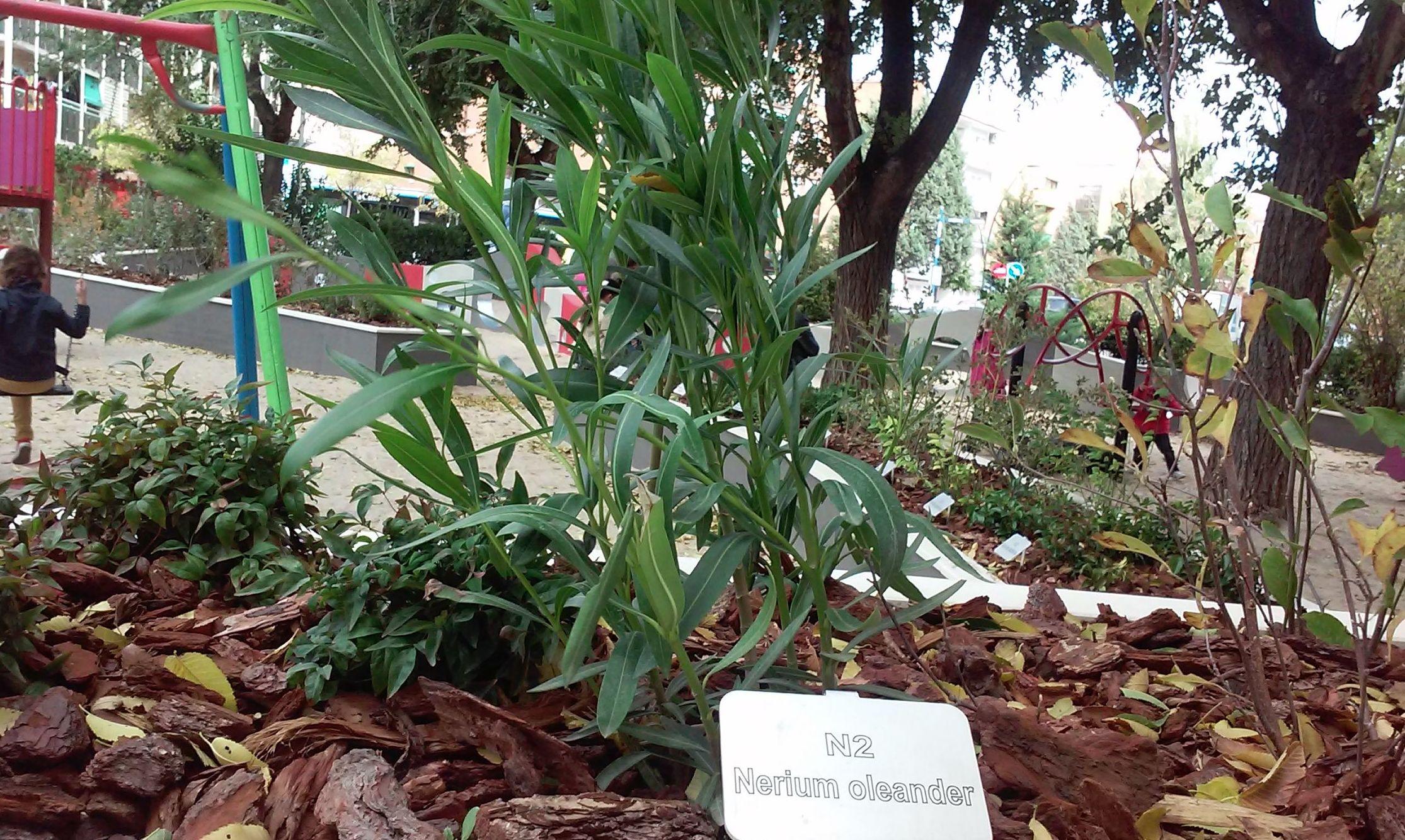 Foto 83 de Diseño y mantenimiento de jardines en  | Danimayos Crea Tu Jardin