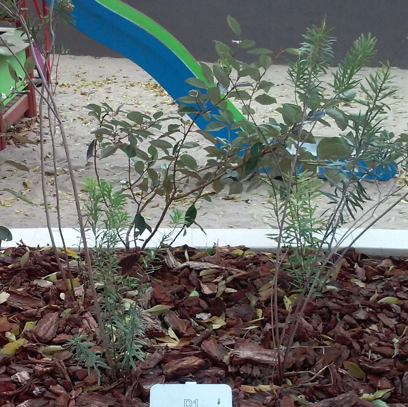 Foto 97 de Diseño y mantenimiento de jardines en  | Danimayos Crea Tu Jardin