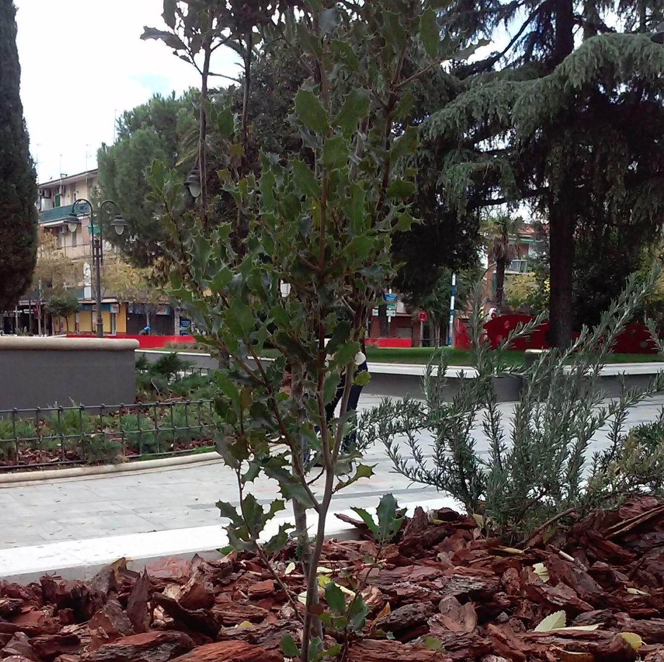 Foto 75 de Diseño y mantenimiento de jardines en  | Danimayos Crea Tu Jardin