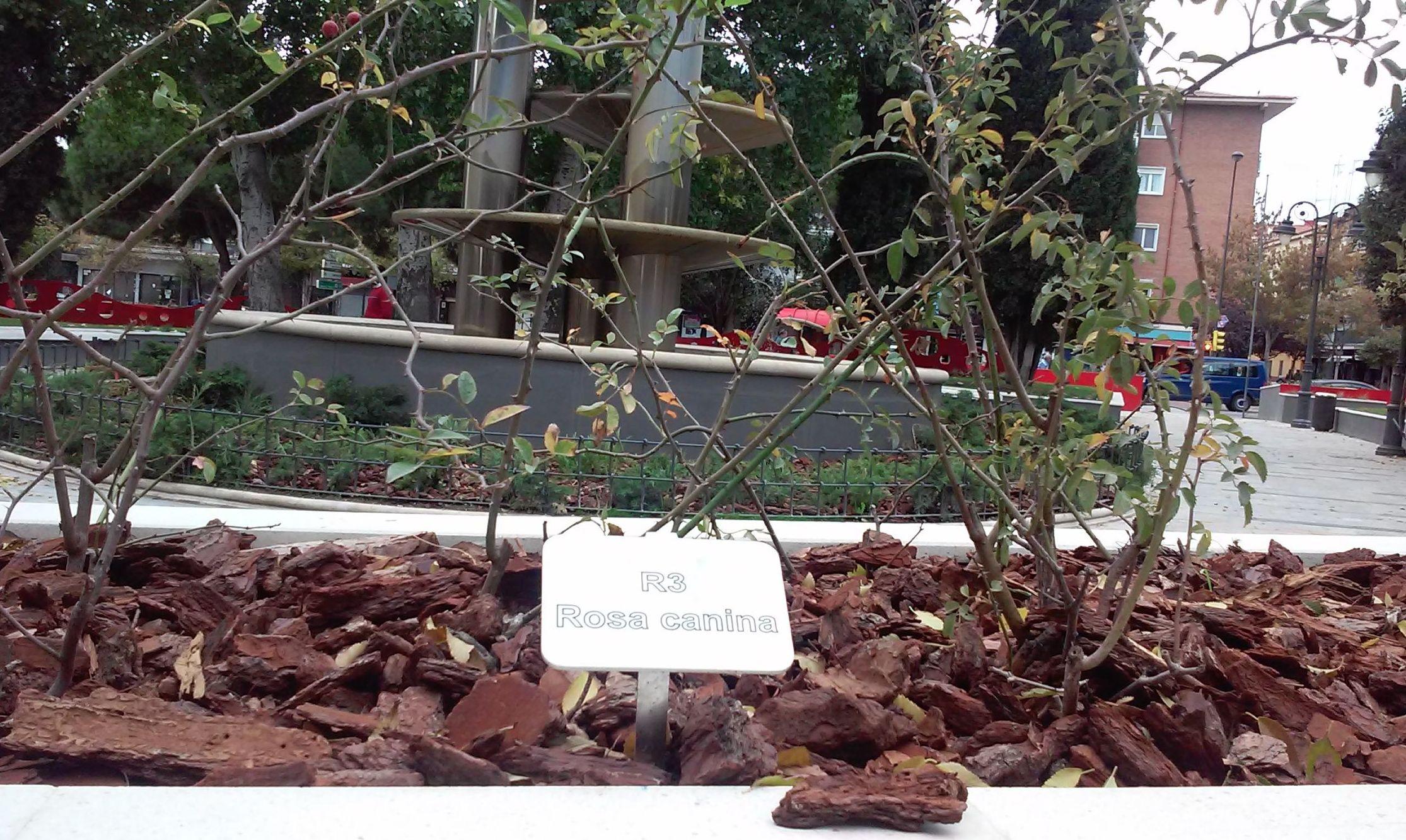 Foto 72 de Diseño y mantenimiento de jardines en  | Danimayos Crea Tu Jardin