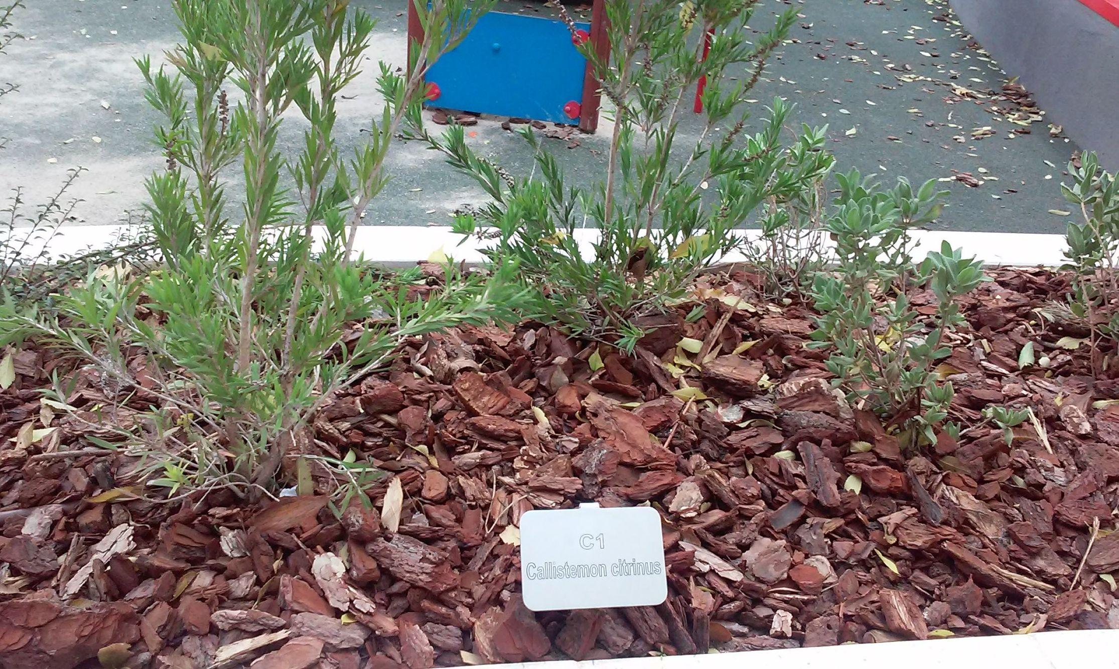 Foto 101 de Diseño y mantenimiento de jardines en  | Danimayos Crea Tu Jardin
