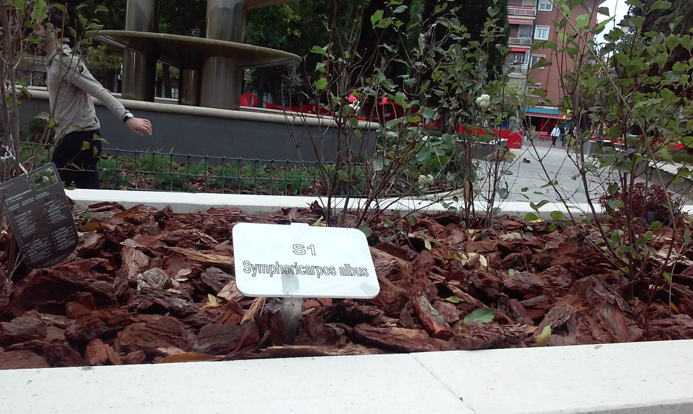 Foto 71 de Diseño y mantenimiento de jardines en  | Danimayos Crea Tu Jardin
