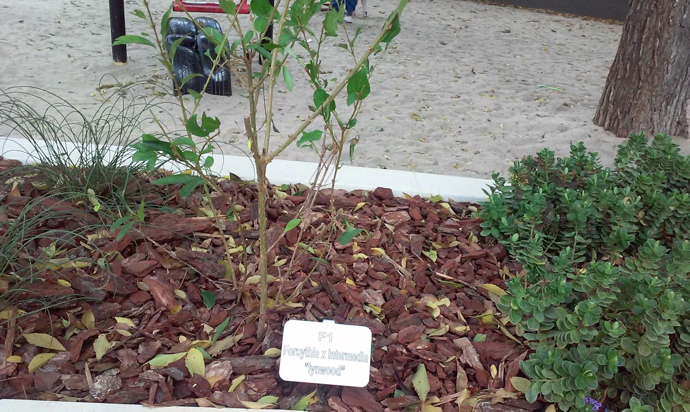 Foto 94 de Diseño y mantenimiento de jardines en  | Danimayos Crea Tu Jardin