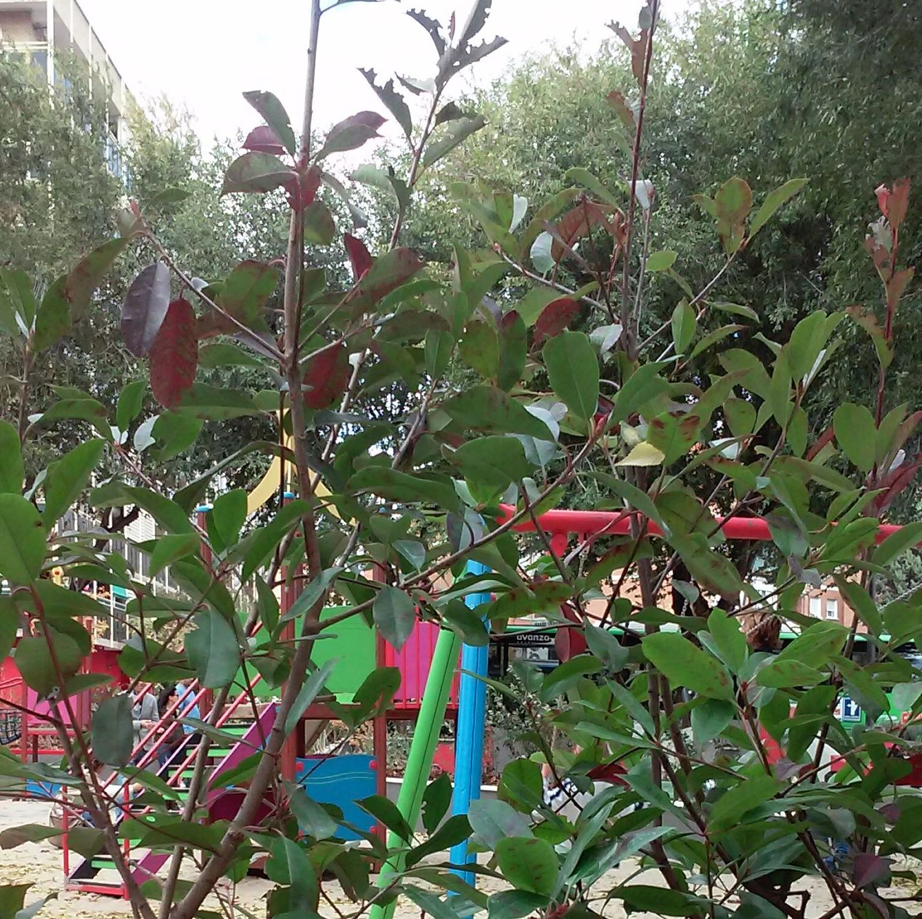 Foto 77 de Diseño y mantenimiento de jardines en  | Danimayos Crea Tu Jardin