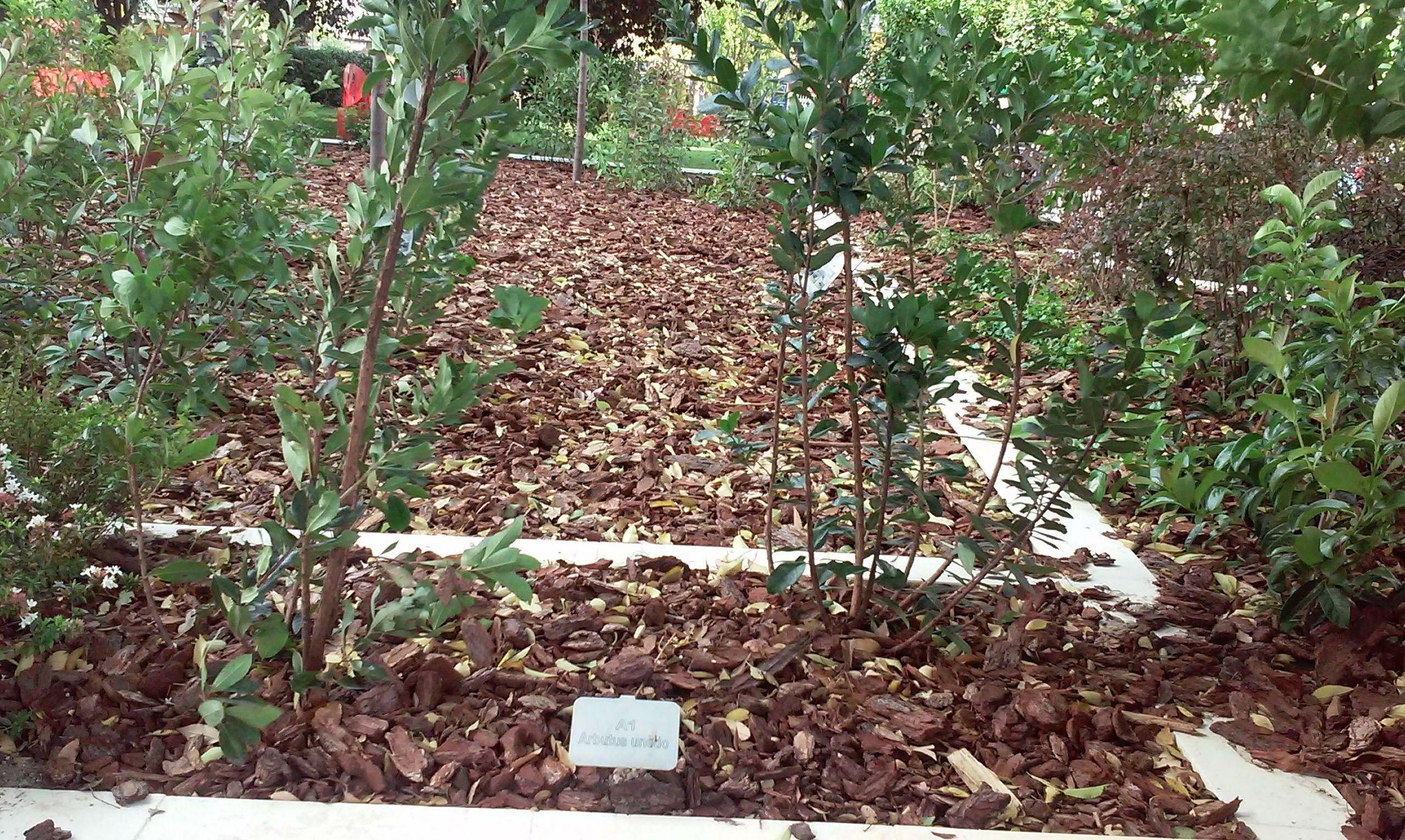 Foto 106 de Diseño y mantenimiento de jardines en  | Danimayos Crea Tu Jardin