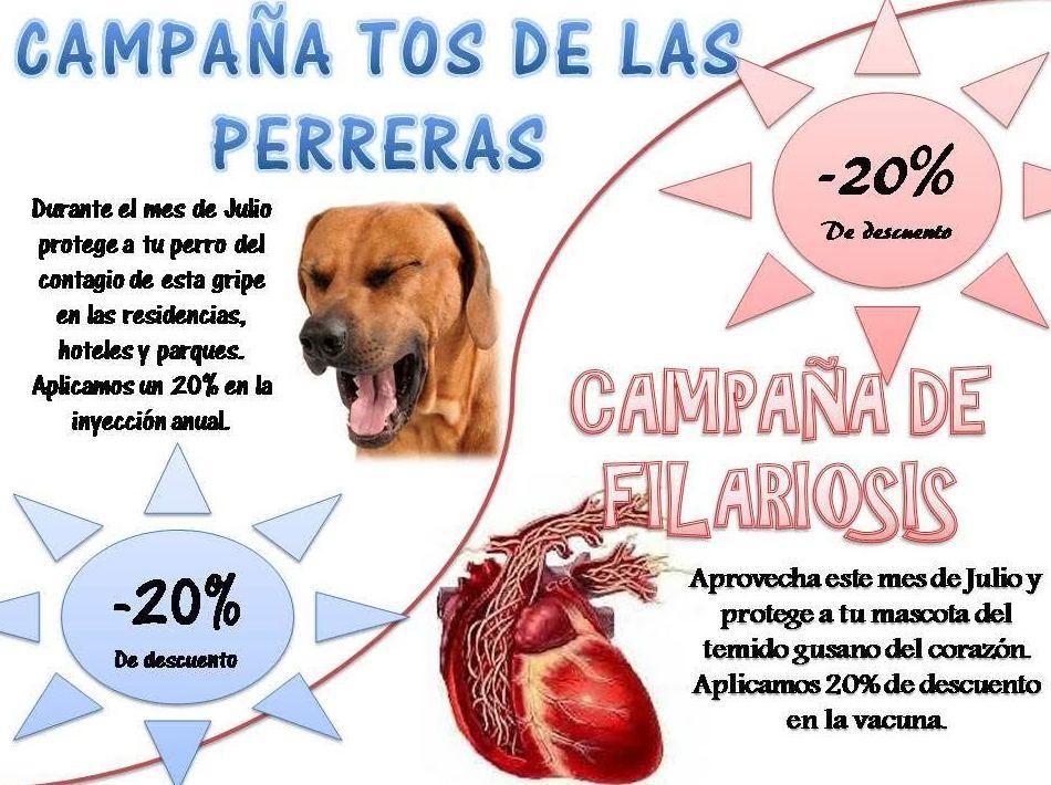 Filaria o tos de las perreras en Madrid