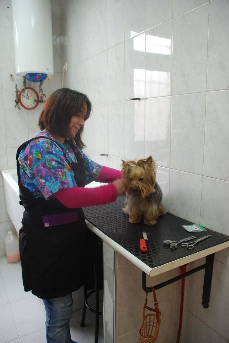 Peluquería : Especialidades  de Centro Veterinario Veracruz