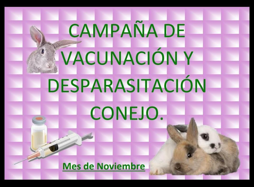 Campaña de vacunación y desparasitación para conejos