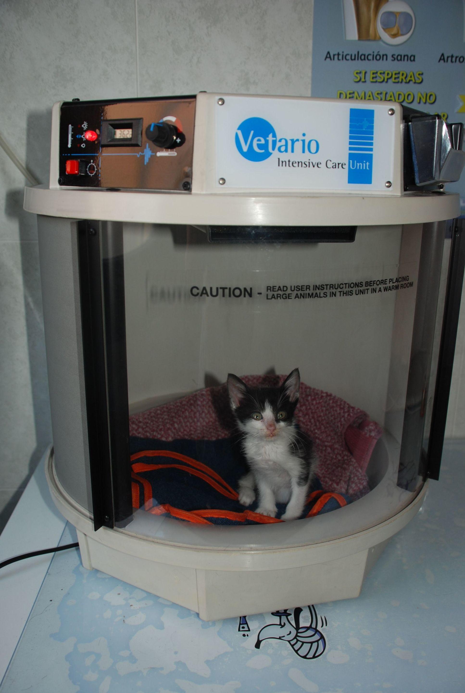 Sueroterapia clínica veterinaria  Mostoles http://www.veterinariosmostoles.com/es/