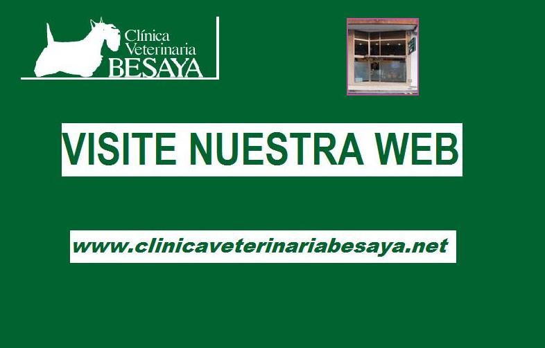 Foto 11 de Veterinarios en Torrelavega | Clínica Veterinaria Besaya