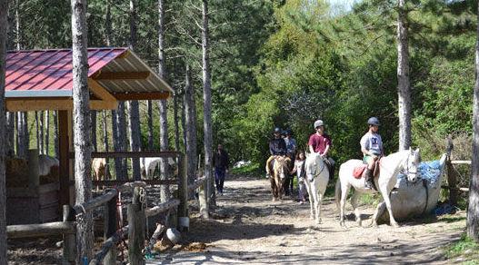 Clases de equitación en Navarra