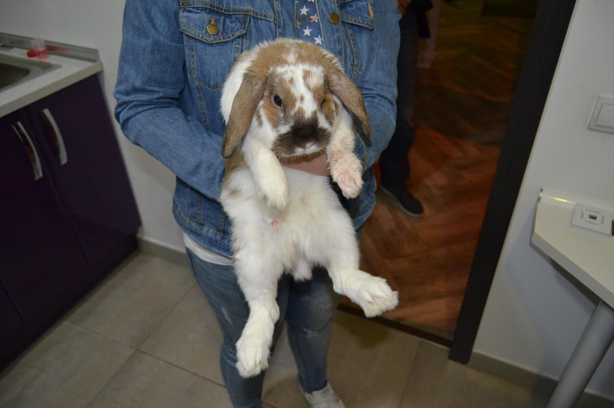 Accesorios para mascotas, urgencias veterinarias...