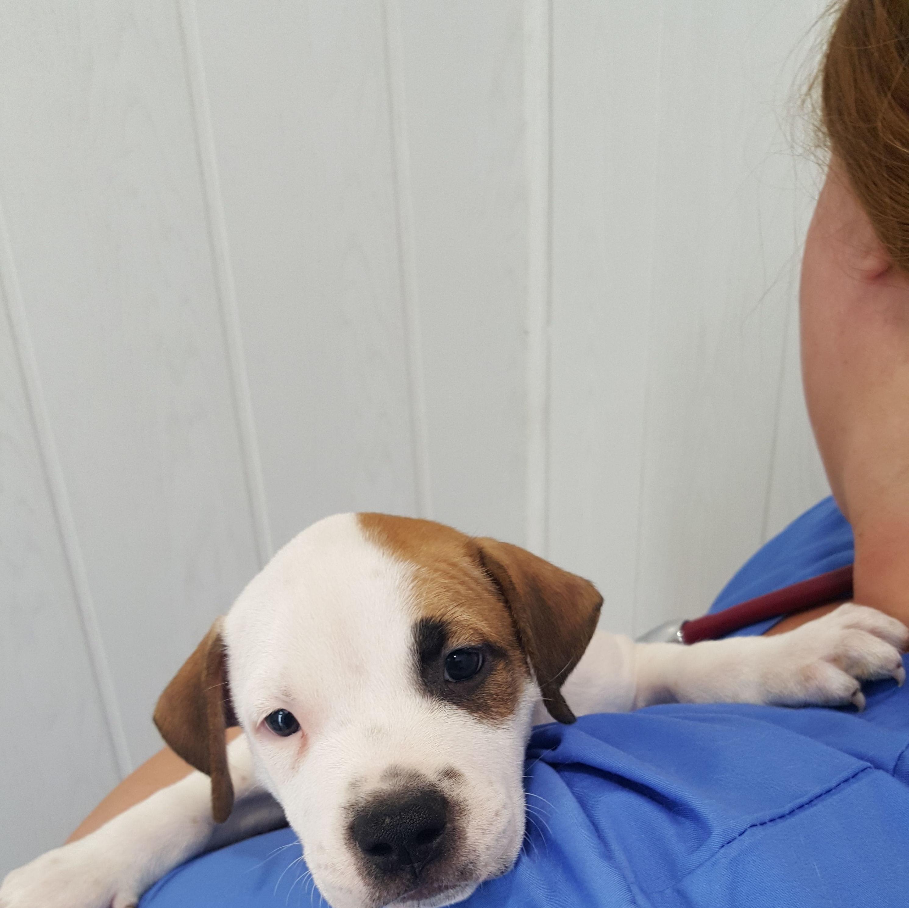 Foto 12 de Peluquería canina en Alcorcón | Clínica Veterinaria Centralvet