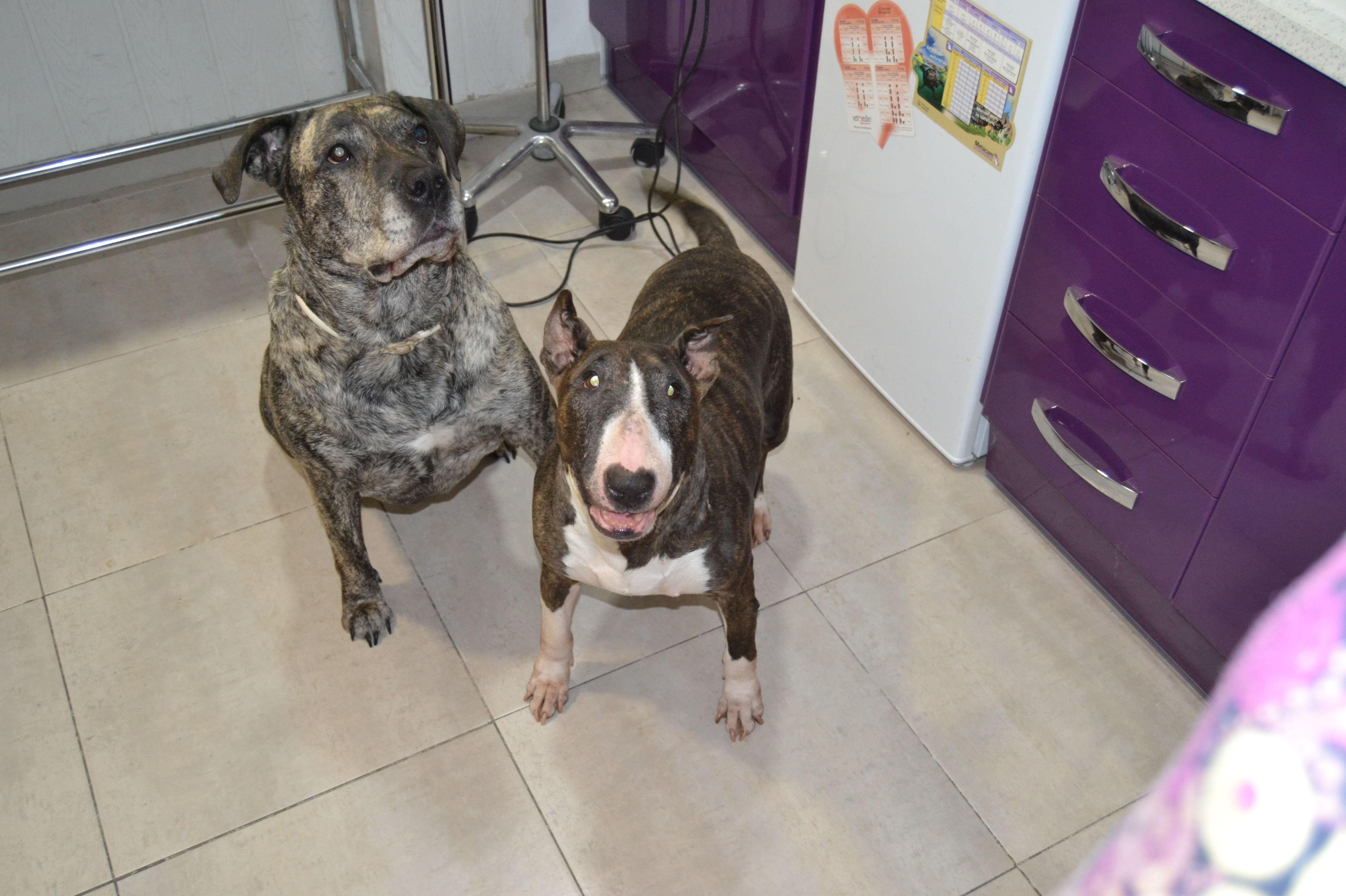 Nuestras perras Shirka y Neska