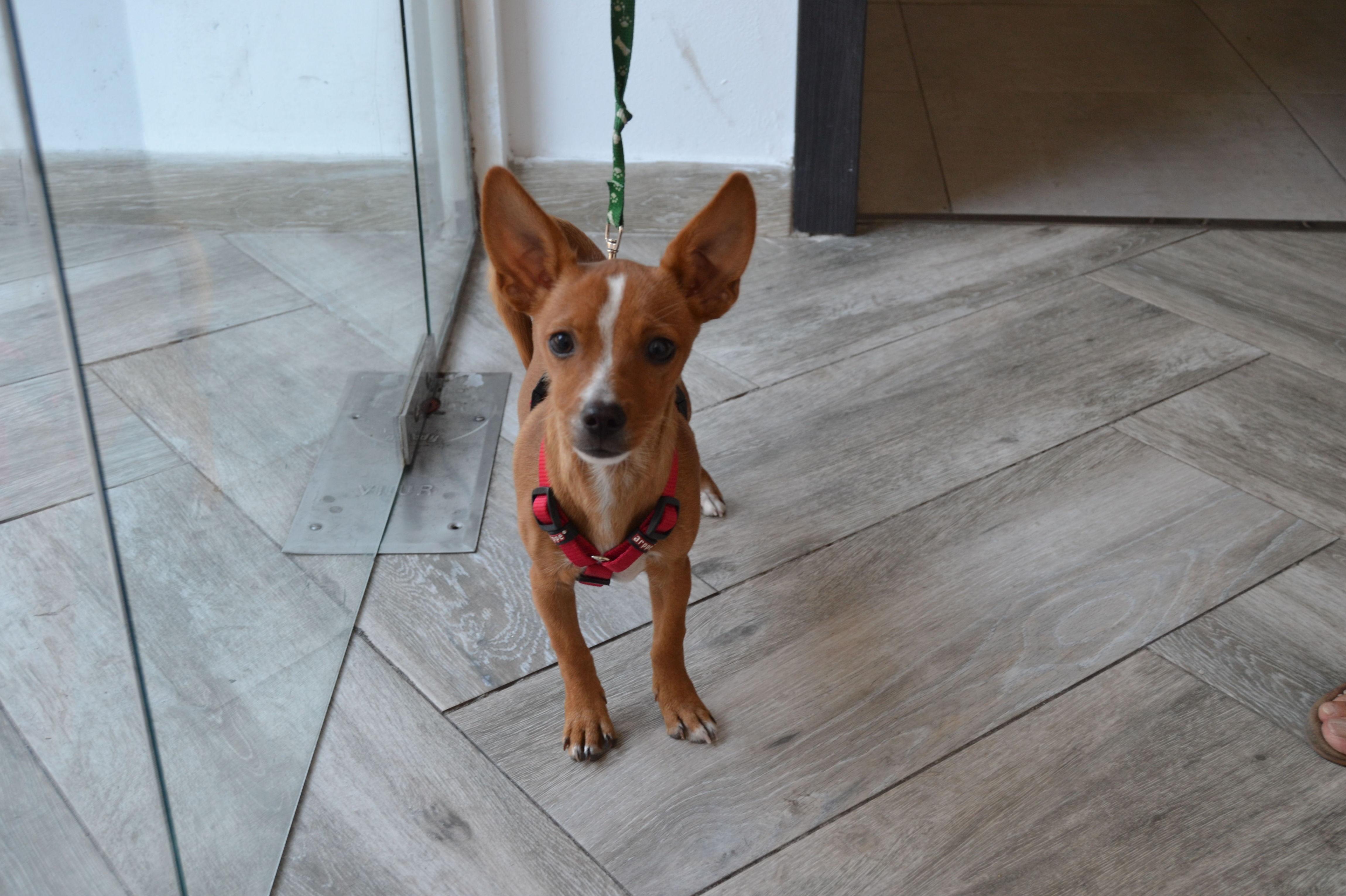 Foto 61 de Peluquería canina en Alcorcón | Clínica Veterinaria Centralvet