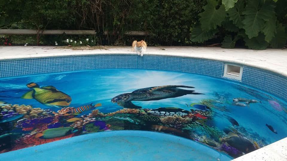 Decoración en 3D para piscinas en Tenerife