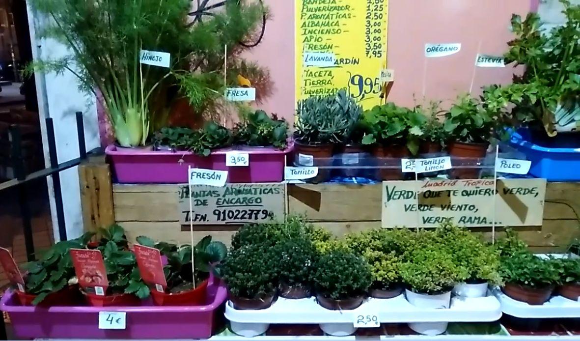 Plantas aromáticas y semilleros en Chamberí