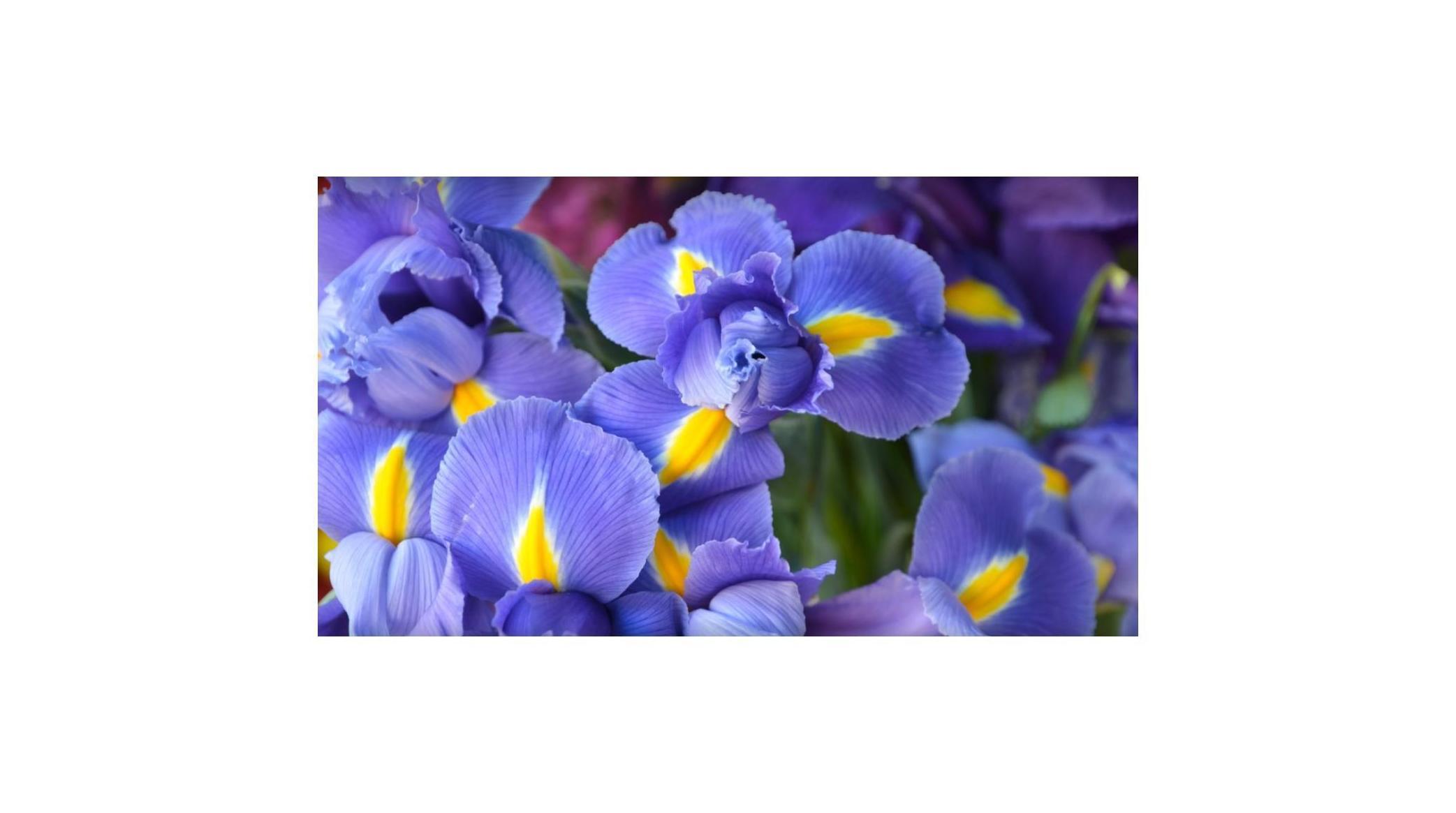 Plantas: Decoración y flores de Floristería Miguel