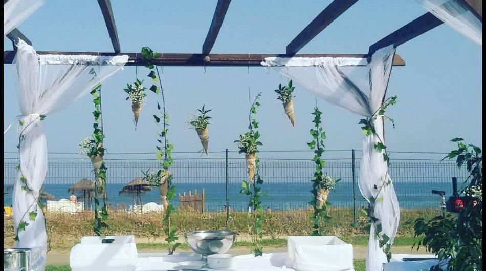 Plantas decorativas para celebraciones