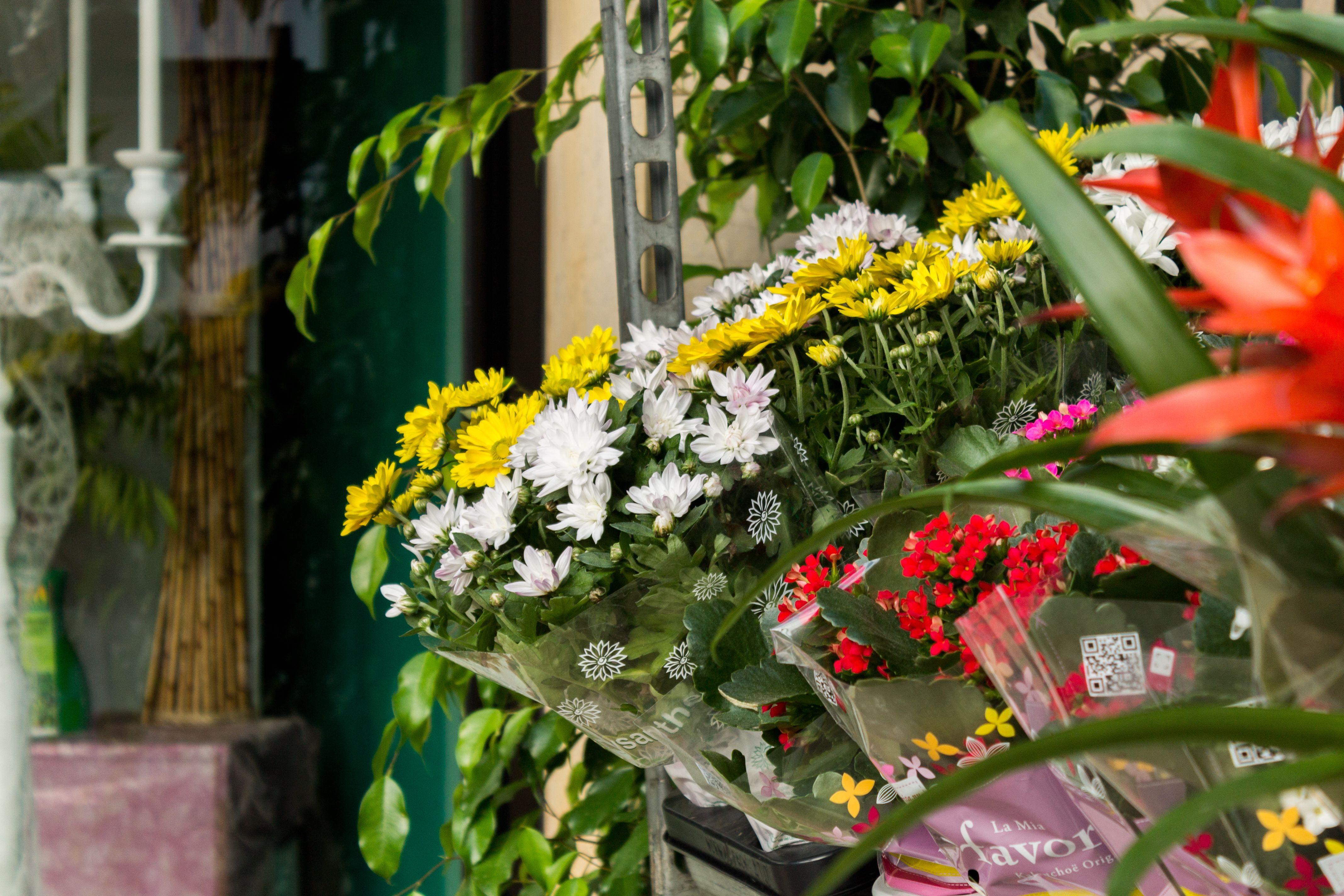 Foto 1 de Floristerías en Málaga   Floristería Miguel