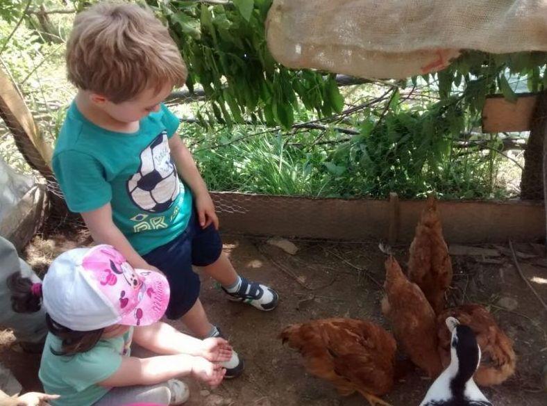 Visita a la granja en familia