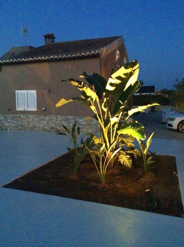 iluminacion de plantas