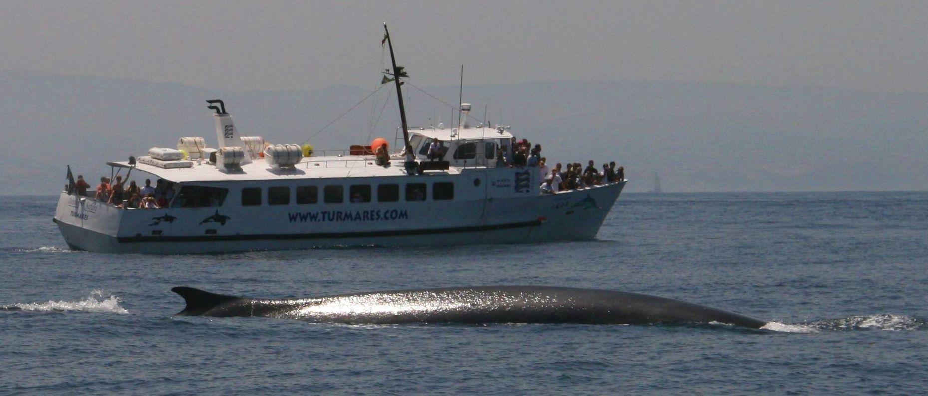Monitor de Avistamiento de Cetáceos: Excursiones de Turmares Tarifa