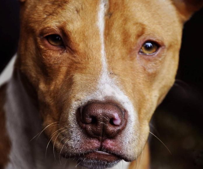 Certificados para tenencia de animales peligrosos: Permisos y certificados de Crm Nueva Segovia