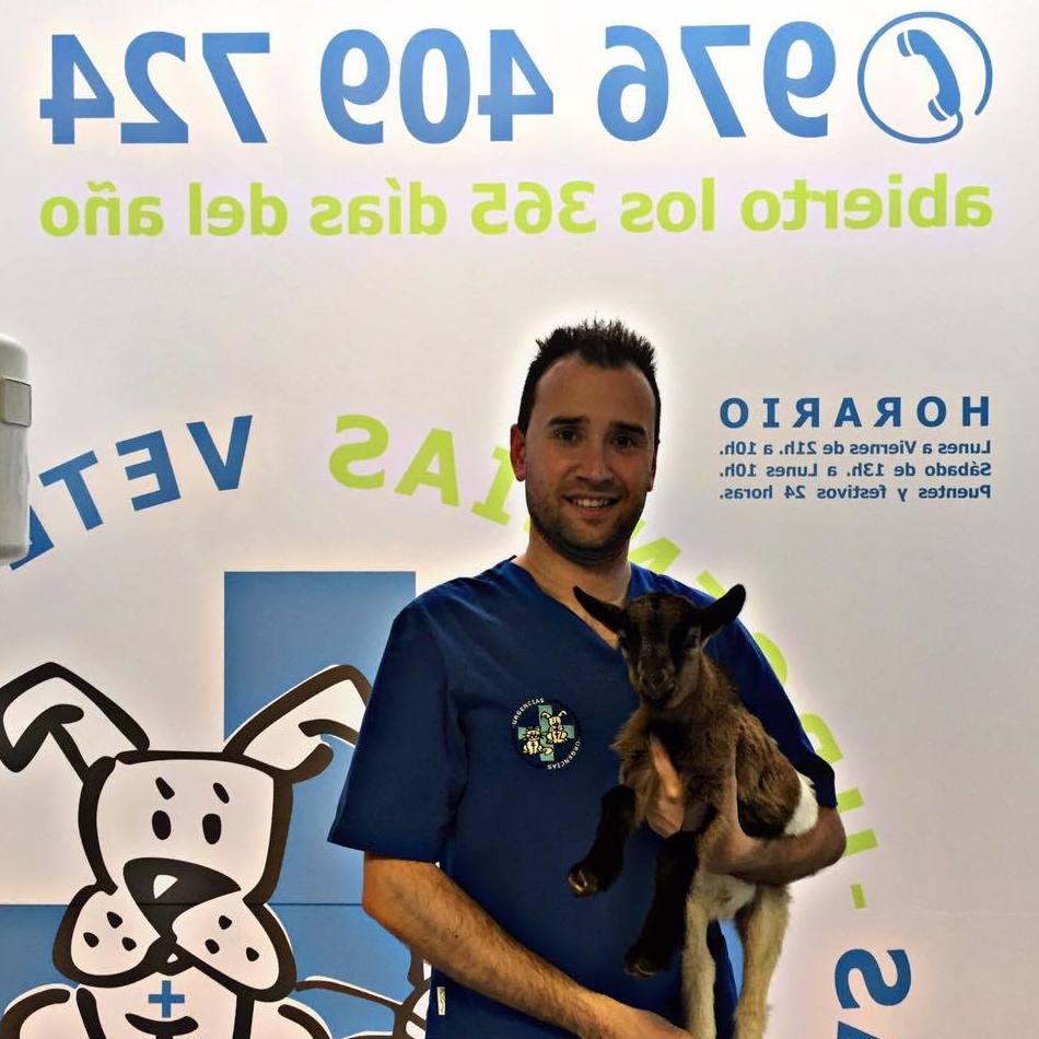 Foto 1 de Veterinarios en Zaragoza | Urgencias Veterinarias Zaragoza