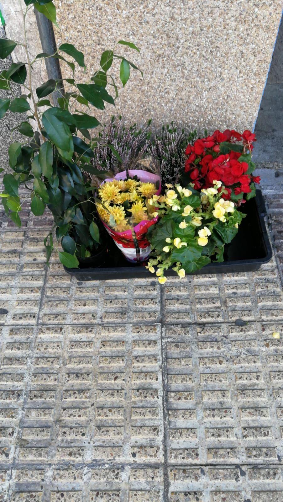 Flores naturales y artificiales