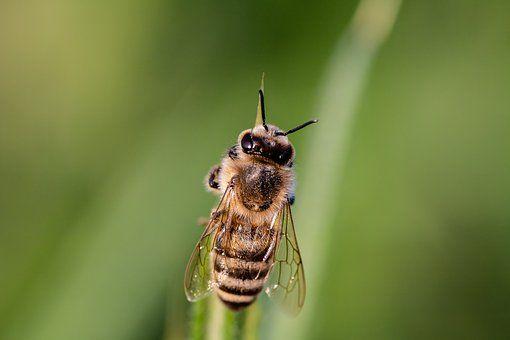 Se acabaron los insectos en casa