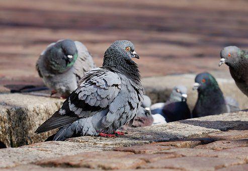 Control de aves