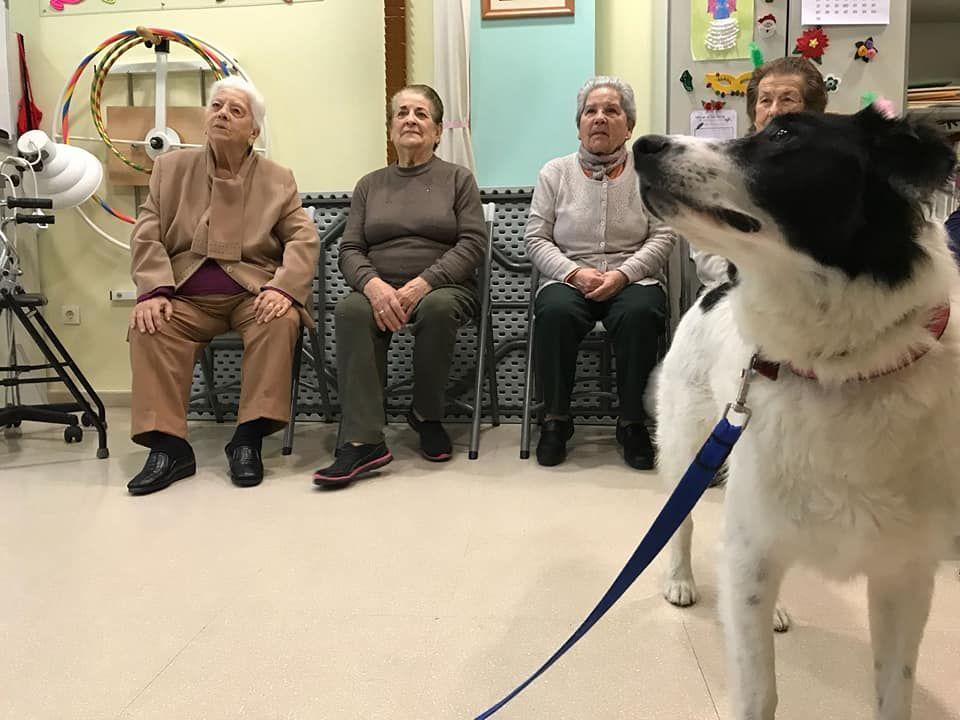 Terapias con animales para personas mayores en Sevilla