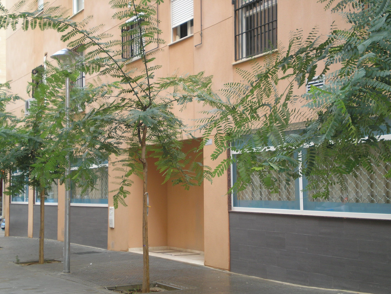 Centro para mayores de atención diurna en Sevilla