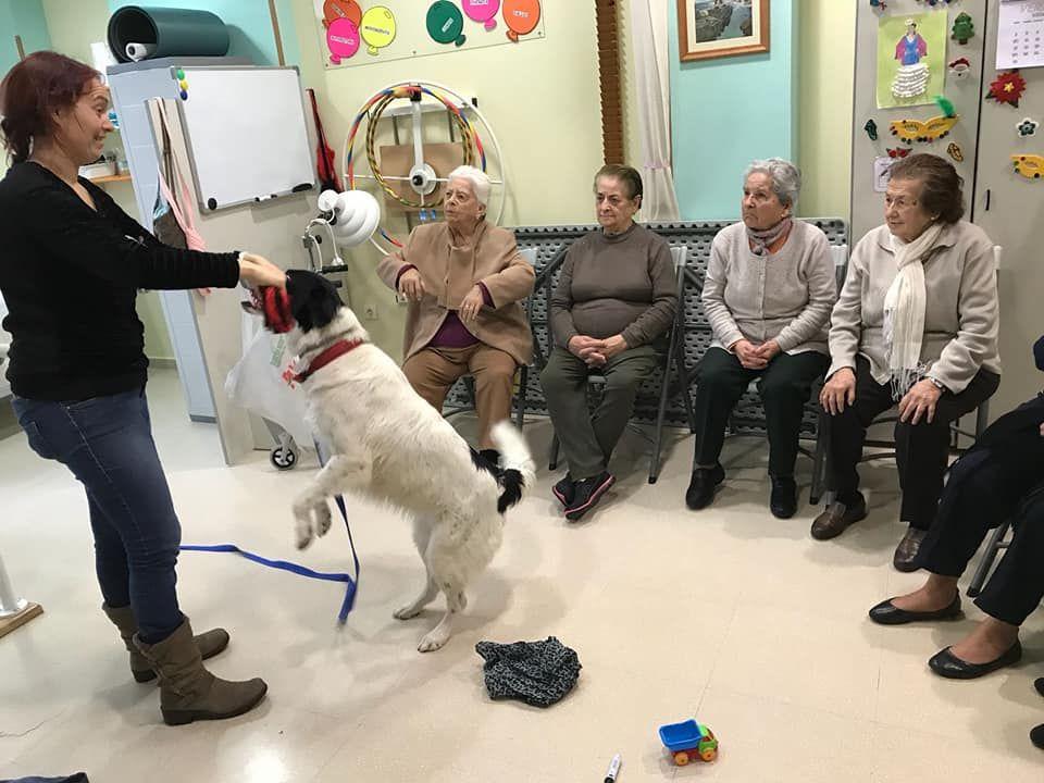 Centro para mayores con terapia con aimales