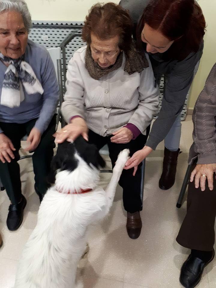 Animales adiestrados para terapias con personas mayores