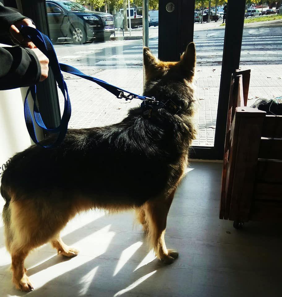 Peluquería canina en Manresa